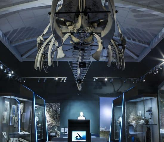Manx Museum - Thie Tashtee Vannin