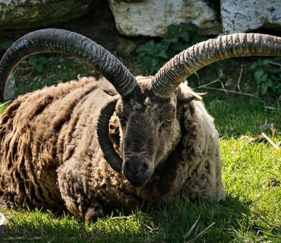 The 7th North Atlantic Native Sheep and Wool Conference : Artisan Market