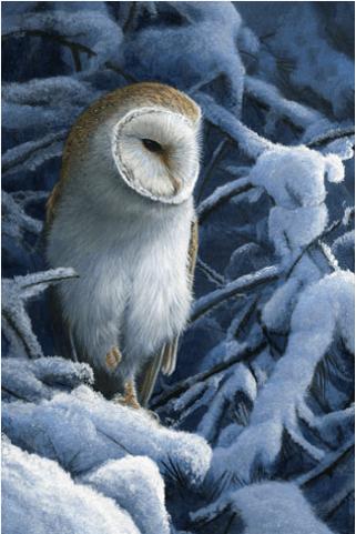 Heavy Snow Barn Owl Christmas Card by Jeremy Paul