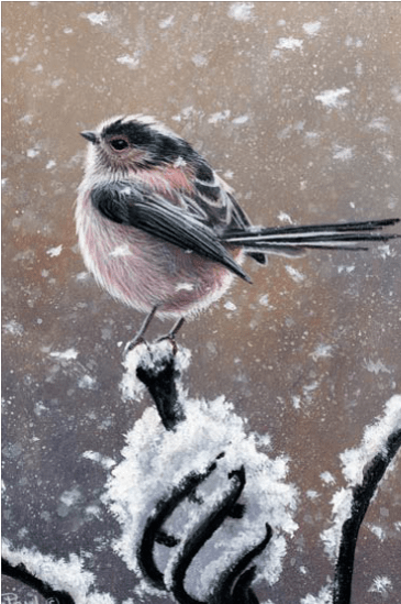 Long Tailed Tit Christmas Card by Jeremy Paul