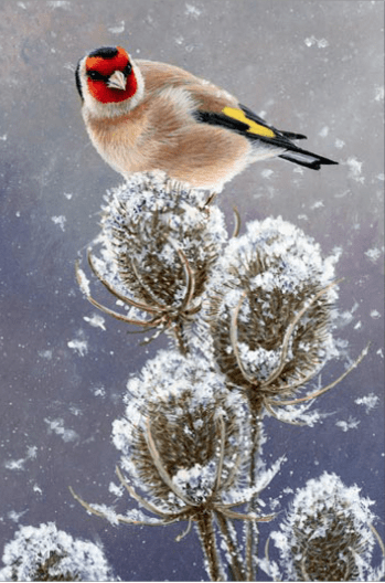 Teasels and Goldfinch Card by Jeremy Paul