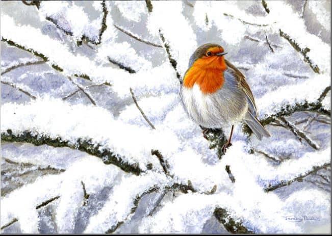 Winter Robin by Jeremy Paul Image copyright Jeremy Paul