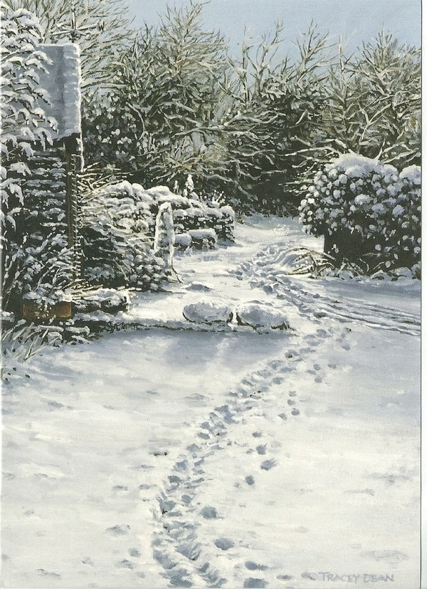 'Footprints in the Snow' Greeting Card by Tracey Harding Image copyright Tracey Harding