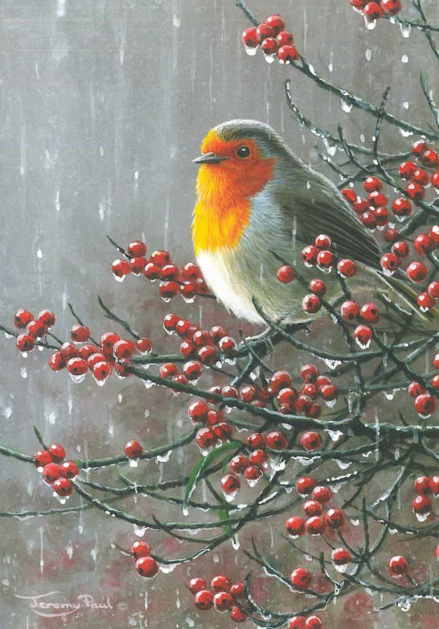 Rainy Day Robin by Jeremy Paul Image copyright Jeremy Paul