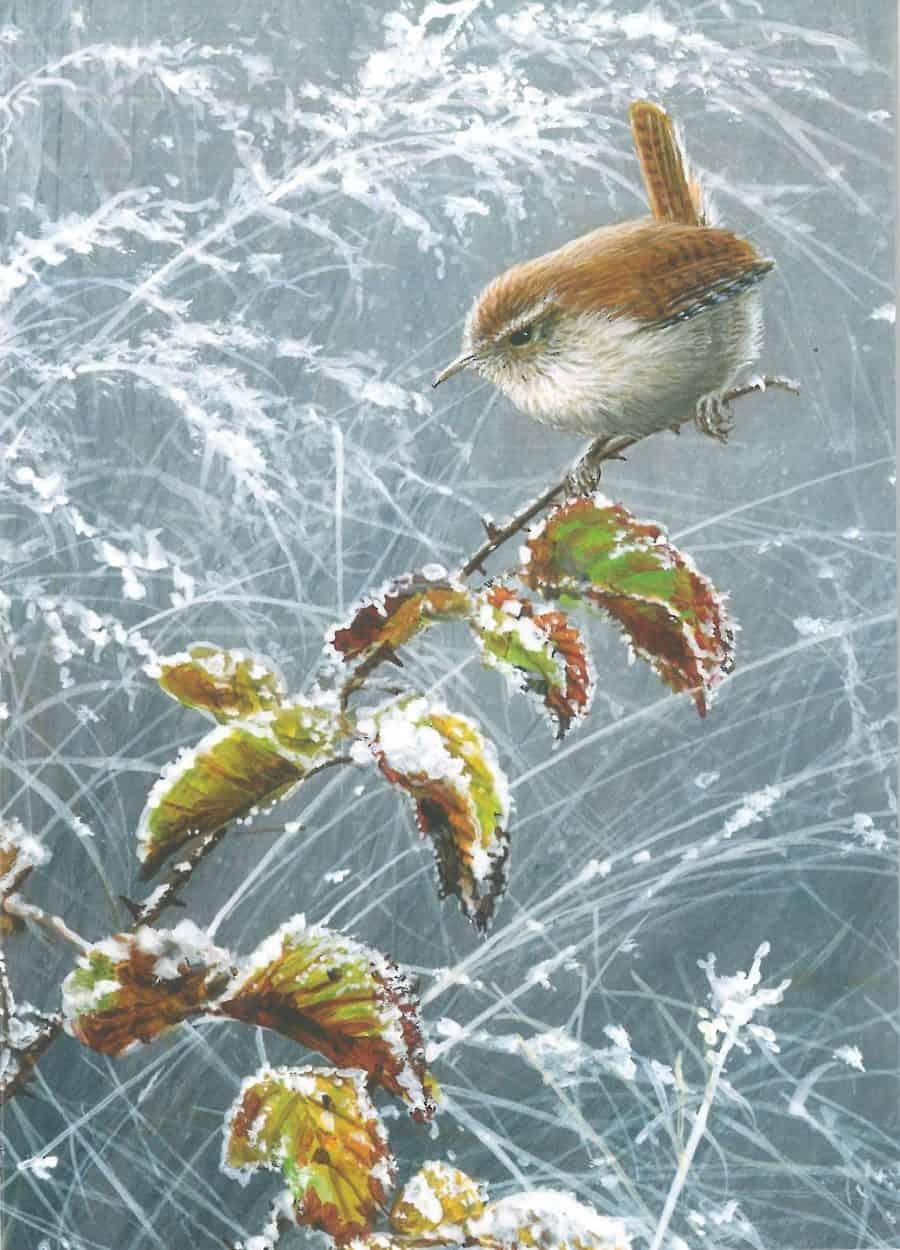 Winter Wren by Jeremy Paul Image copyright Jeremy Paul