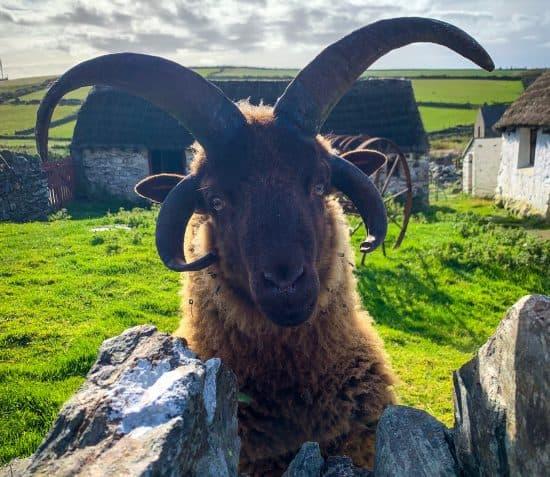 Life on the Farm – Animal Homes and Habitats