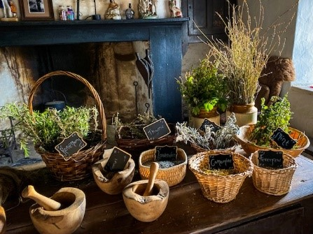Herbs and Potions: a Children's Activity Tour