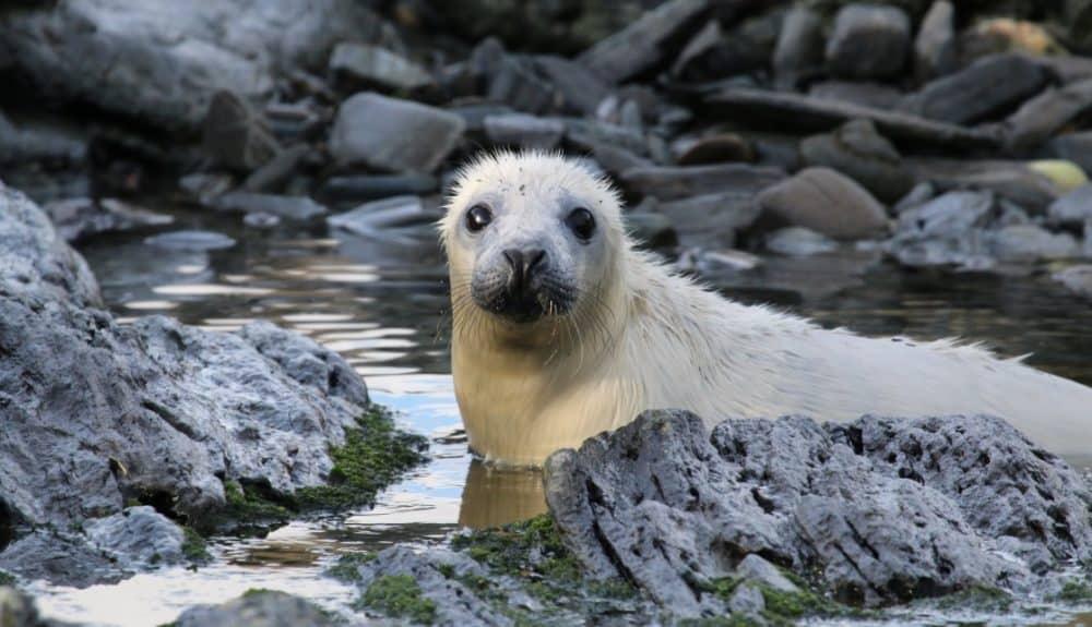 Seal Pup - photo credit: Lara Howe