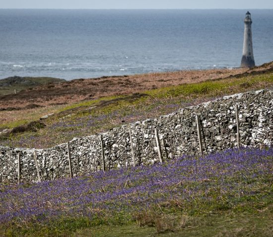 **SOLD OUT** Drystone Walling on the Calf of Man
