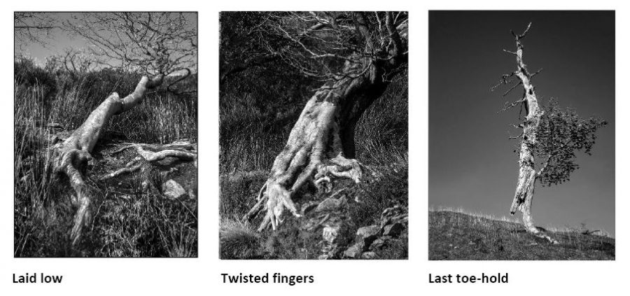 P.Tutt new images - Boundaries Exhibition