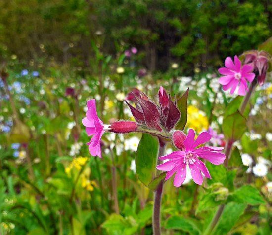 Wildflower Seed Paper Making Workshop – Friends of Manx National Heritage